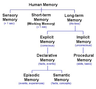 Types of Human Memory:  Diagram by Luke Mastin